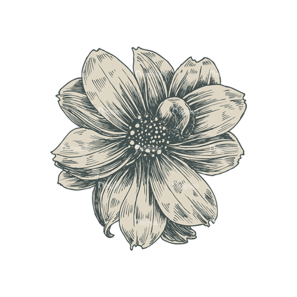 Floral Vector 75 1 1