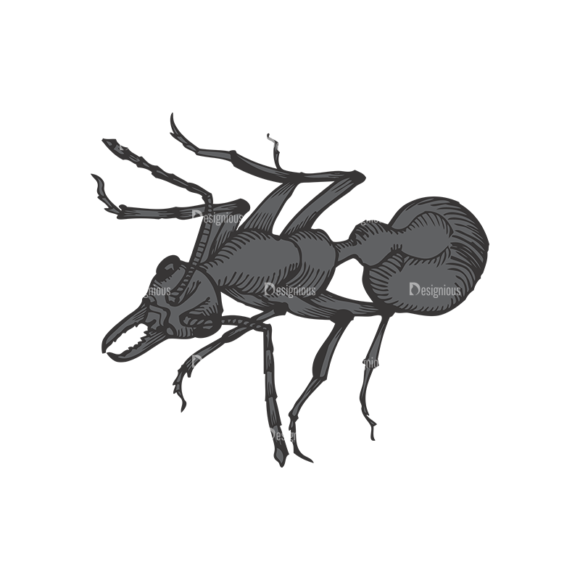 Insects Vector 1 10 1